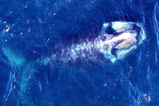 whale02